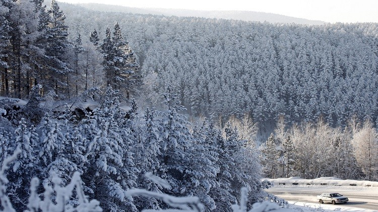 Encuentran respuesta a la anomalía del bosque siberiano