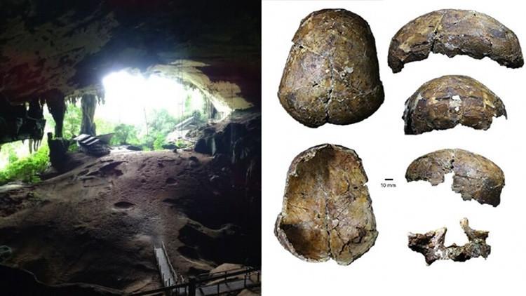 Un cráneo de 37.000 años da una gran sorpresa a la comunidad científica