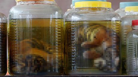 Cachorros de tigre conservados dentro de jarros encontrados en un laboratorio clandestino, Tailandia