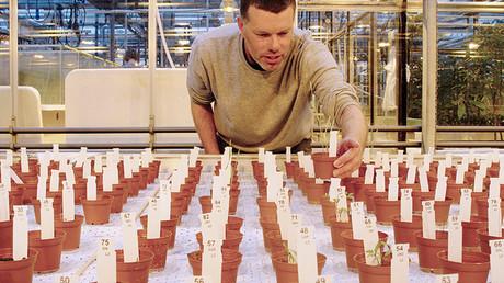 El investigador Wieger Wamelink inspecciona las plantas cultivadas en un área que recrea el suelo de Marte