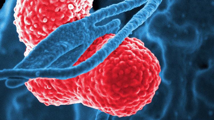 Hallan la primera prueba de que las bacterias intestinales manipulan a nuestro cerebro