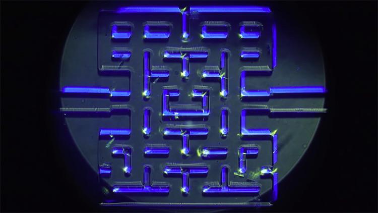 ¿Por qué estos científicos noruegos quieren que los microorganismos jueguen al Pac-Man? (video)