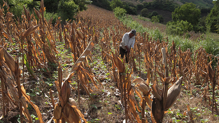 FAO: América Latina puede erradicar el hambre en 2025