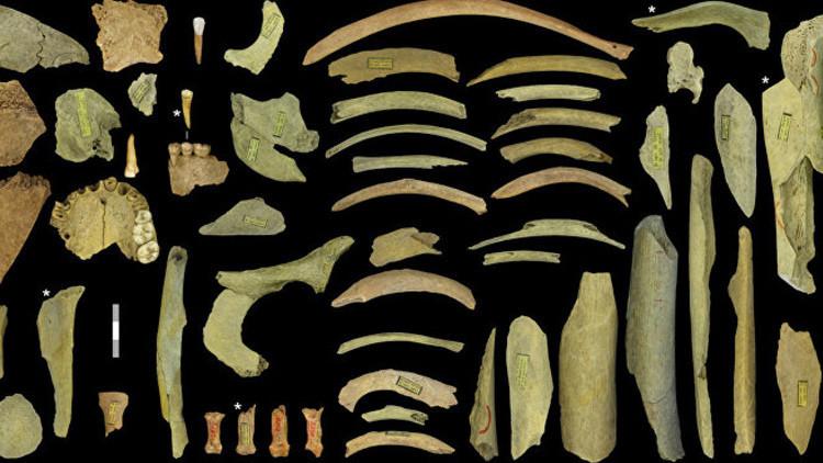 Descubren primera evidencia de que los neandertales europeos eran caníbales