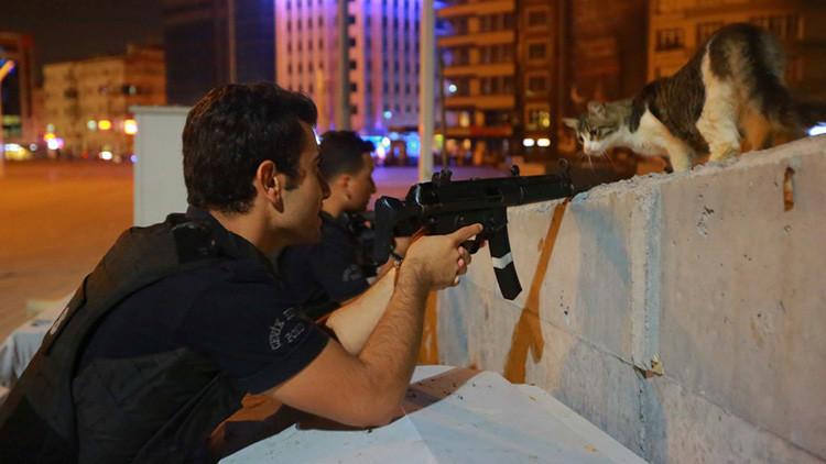 Un gato mira a un policía en Estambul, Turquía, durante el intento de golpe de Estado, el 16 de julio de 2016.