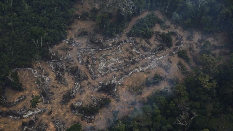 El agronegocio es el principal responsable de la deforestación en América Latina