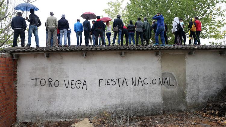 España: presentan la versión 'light' del Toro de la Vega