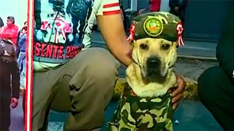 Video: Un perro capta todas las miradas de la Parada Militar peruana