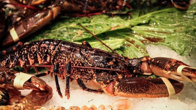 Rescatan a una langosta de casi 100 años que iba a ser cocinada, pero no llega viva al acuario