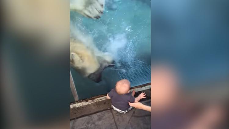 Un oso polar intenta tragarse a un bebé en un zoológico