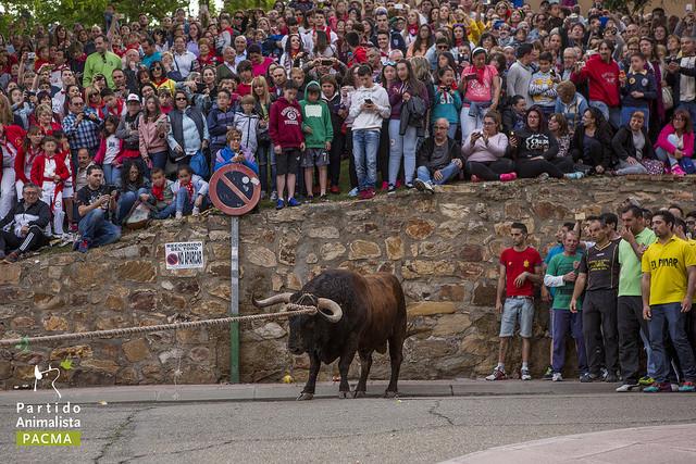 Imagen ilustrativa del festejo popular Toro Enmaromado / Pacma