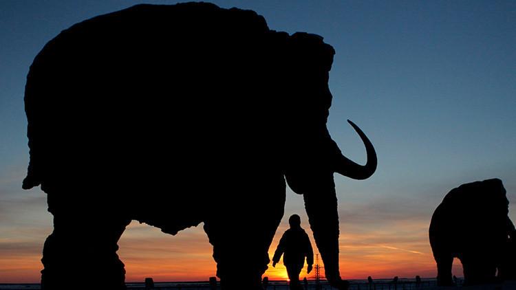 Estudio de la extinción de los mamuts evidencia los peligros para la humanidad