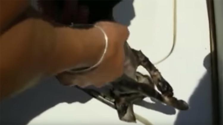 El boca a boca de unos guardacostas italianos salva la vida de un gatito rescatado del mar (video)