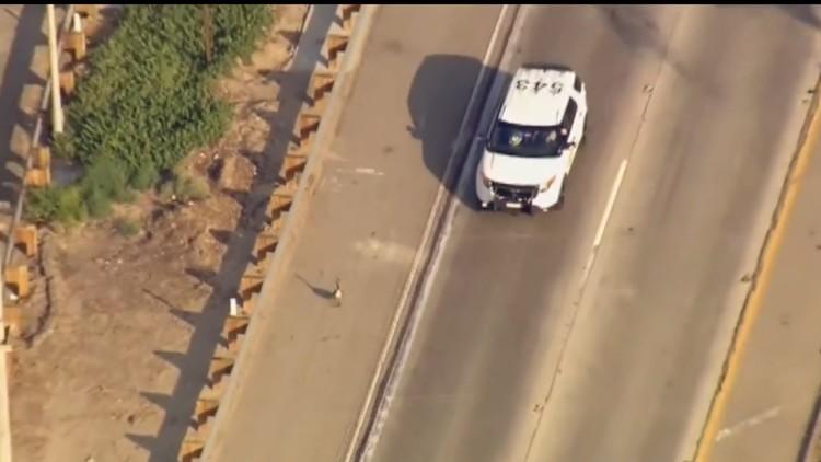 Un ganso imperturbable paraliza el tráfico de toda una carretera