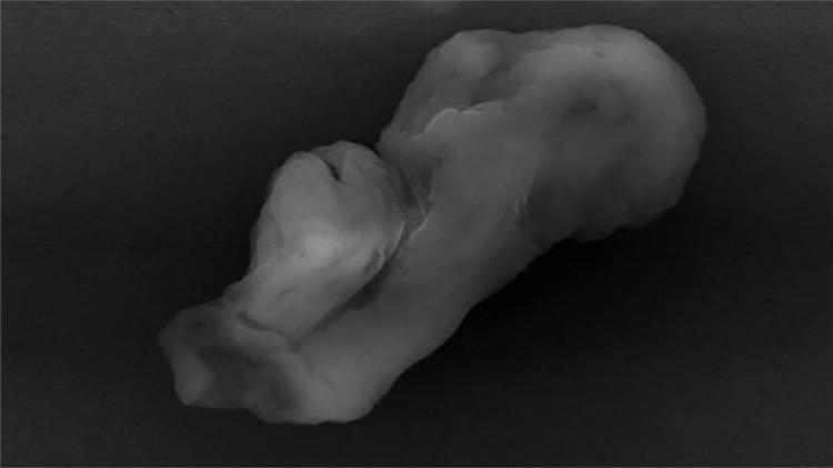 """Foto: Un científico asegura que este """"extraño monstruo"""" demuestra la existencia de extraterrestres"""