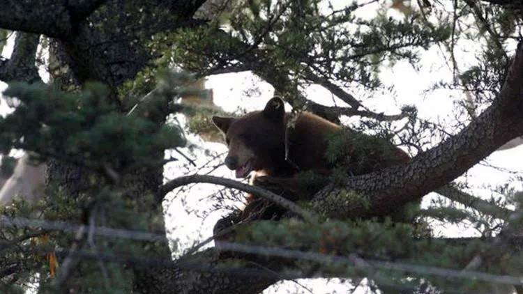 Mata a un oso que amenazaba su casa y sus vecinos le hacen la vida imposible
