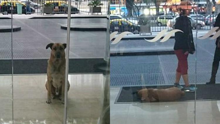 El 'Hachiko' argentino: Un perro vagabundo aguarda seis meses a una azafata a la entrada de un hotel