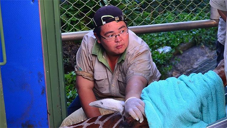 Una jirafa de un zoológico de Taiwán muere de ansiedad cuando iba a conocer a su 'novia'