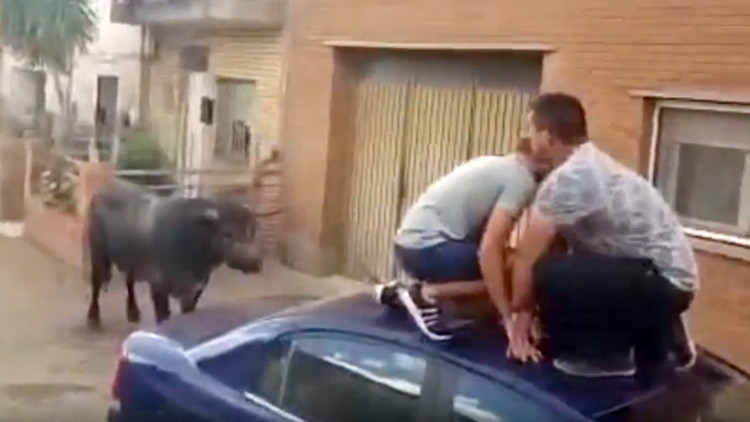 España: Un toro embiste a una niña de 7 años (video)
