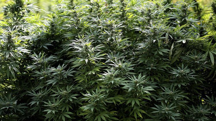 ¿Cannabis sexista?: la marihuana tiene diferentes efectos en hombres y en mujeres