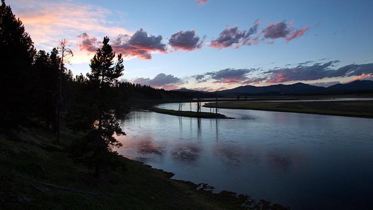 """""""Un caso sin precedentes"""": aparecen decenas de miles de peces muertos en el río Yellowstone (EE.UU.)"""