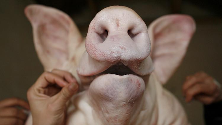 Eurodiputado sugiere reforzar las fronteras con cabezas de cerdo para espantar refugiados