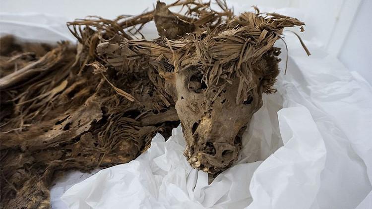 Resuelven el misterio del entierro masivo de perros en el Perú precolombino