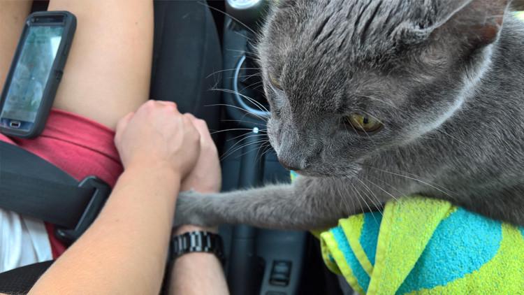 Foto: Un gato enfermo sostiene las manos de sus dueños durante su viaje final