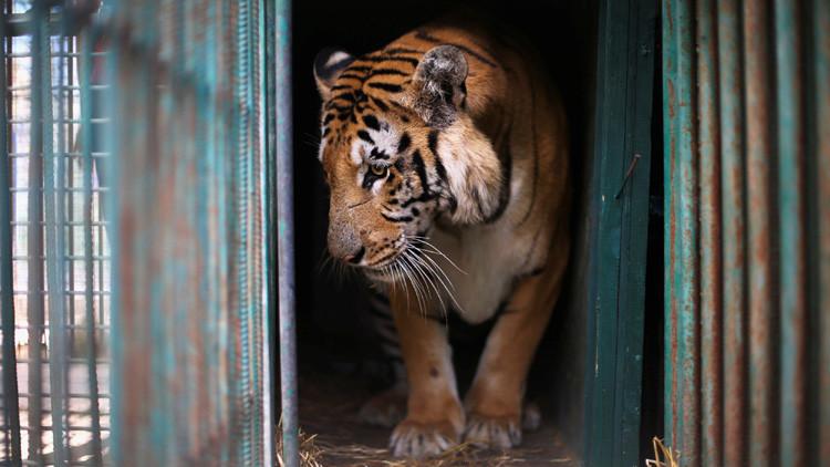 """Un 'infierno': Cierran el """"peor zoológico del mundo"""" (Video, fotos)"""