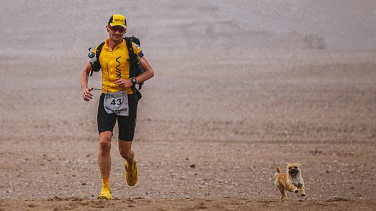 Vuelve a China a por la perrita que corrió con él un maratón de 250 kilómetros a través del desierto