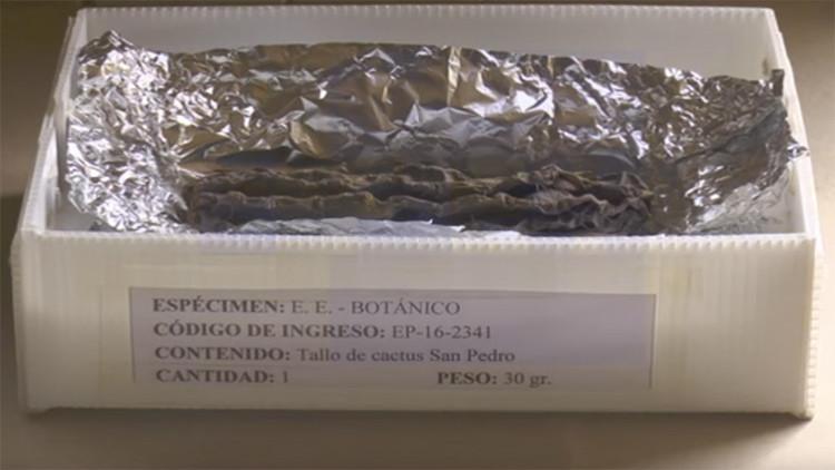 Un cactus milenario puede revelar el misterio de antiguos rituales en Perú
