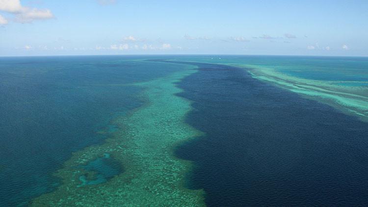 Hallan un nuevo arrecife tras la Gran Barrera de Coral australiana (foto)