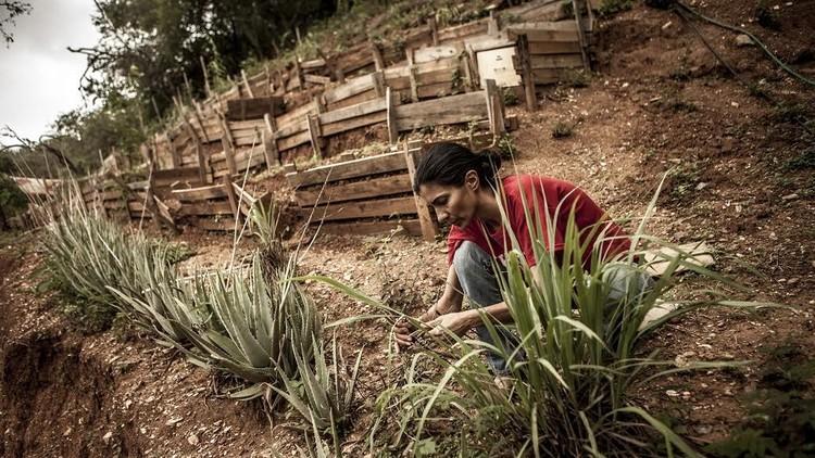 En Caracas una familia siembra hortalizas y cría peces para evitar la guerra económica