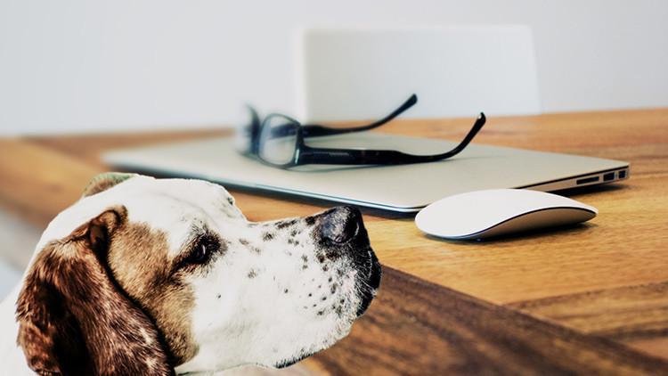 Los perros entienden lo que les decimos, afirman científicos