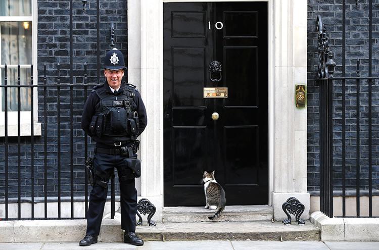 Qué nos cuentan sobre el gabinete británico las peleas de gatos de Downing Street? - RT
