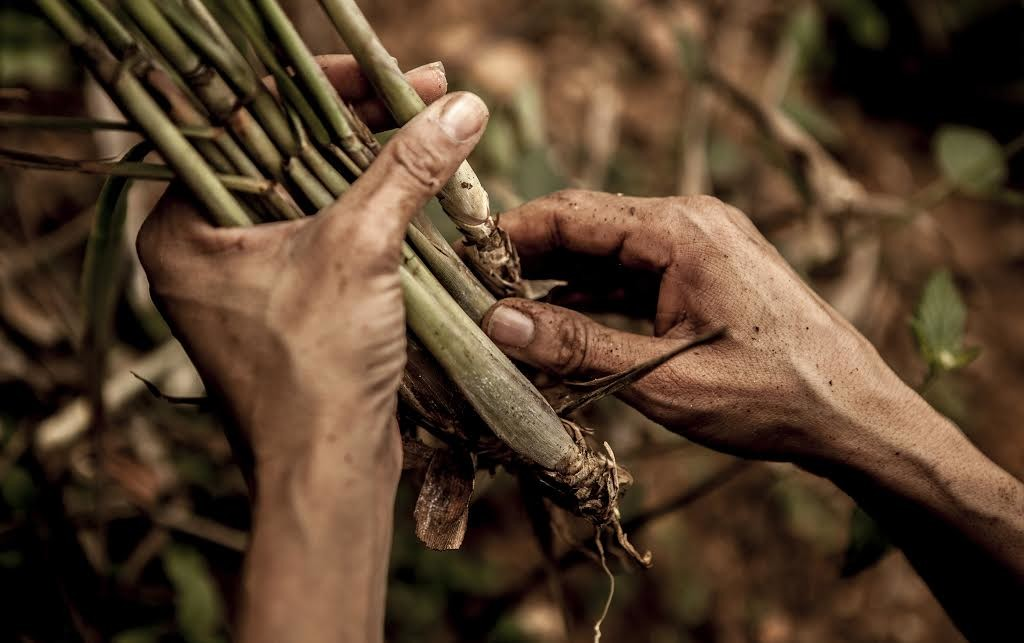 """De sus manos, los alimentos para más de 200 familias, """"El Algodonal"""", Caracas, Agosto 2016"""