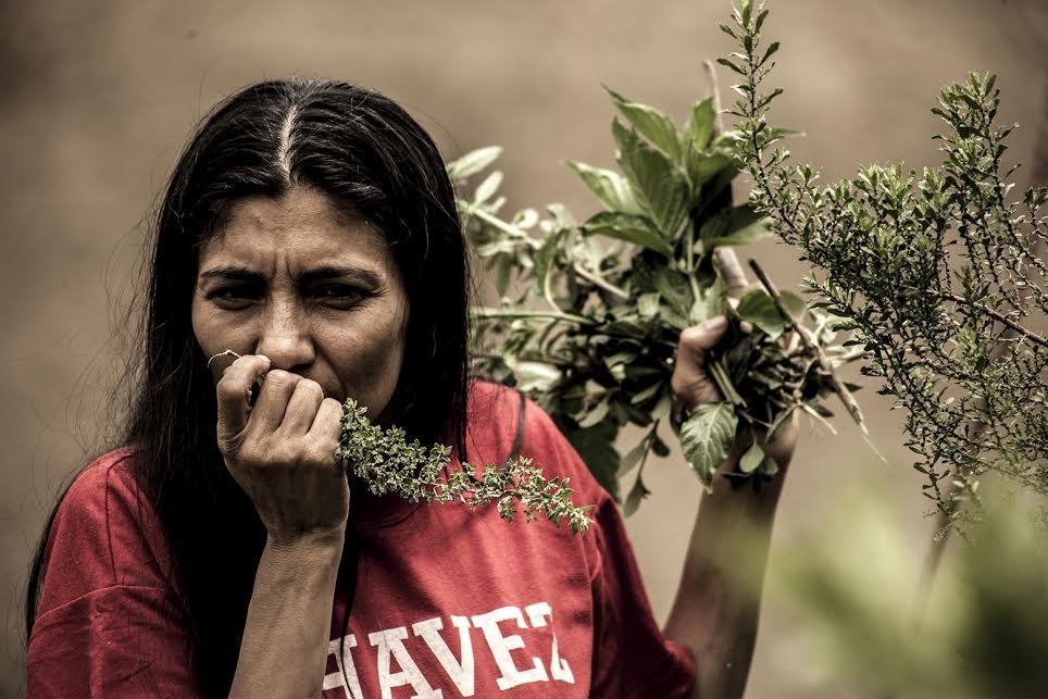"""Frutas tropicales y hortalizas orgánicas se cultivan en """"El Algodonal"""", Caracas, Agosto 2016"""