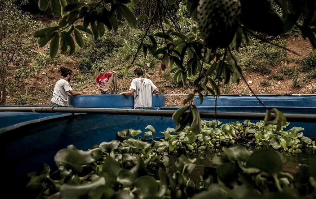 En caracas una familia siembra hortalizas y cr a peces for Cria de peces en casa