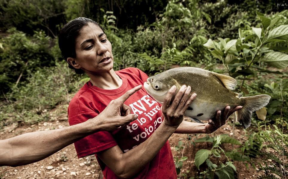 """Orailene Macarri muestra los peces en proceso de crecimiento. """"El Algodonal"""", Caracas, Agosto 2016"""