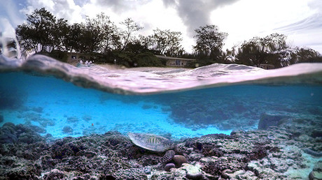 Conozca como los peces enfrentan el cambio climático para sobrevivir