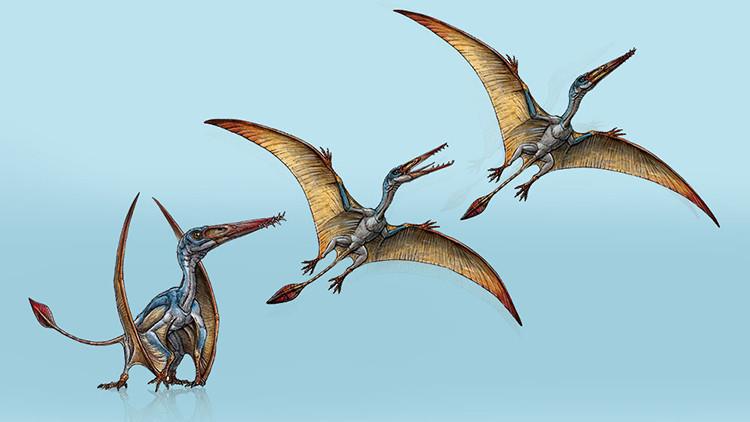 Argentina: Hallan una nueva especie de reptil volador en la Patagonia