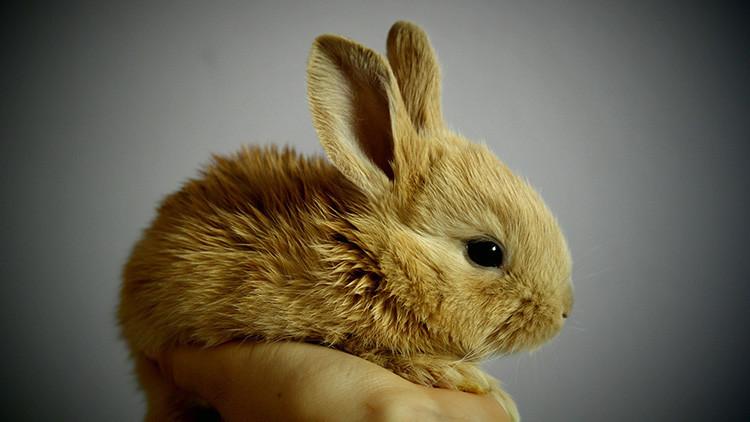 La ecografía de una mujer embarazada de un 'conejo' suscita bromas en la Red