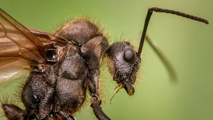 El infierno de las hormigas se encuentra en un antiguo búnker soviético