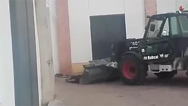 FUERTES IMÁGENES: Así torturan hasta la muerte a una vaquilla tras un festejo taurino (+18)