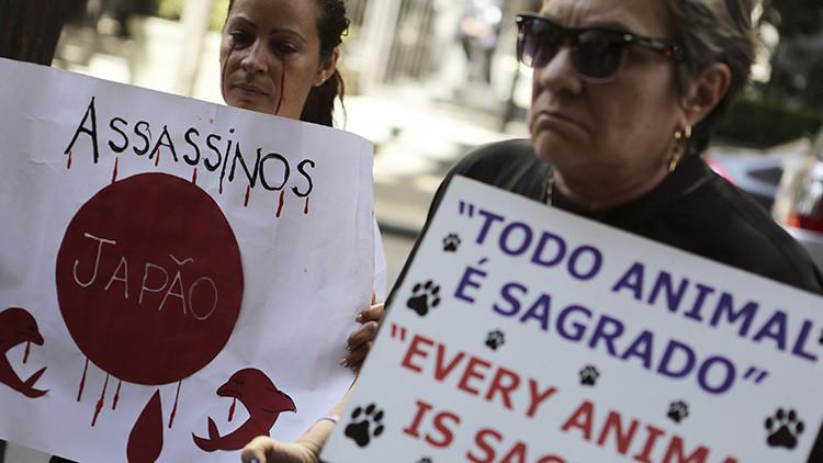 Comienza en Japón la controvertida y cruel temporada de caza de delfines
