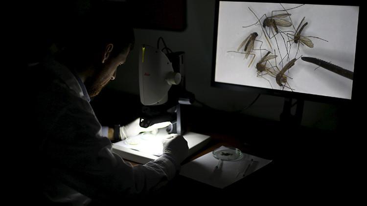 """Impulsores genéticos: ¿Un """"arma biológica"""" para destruir especies?"""