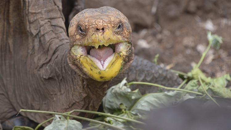La historia de Diego, la tortuga que tuvo 800 crías y salvó a su especie de la extinción