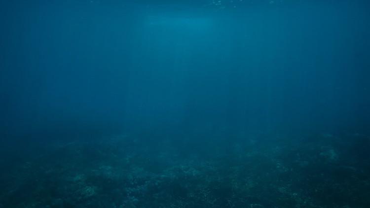 ¿Un pulpo con orejas de elefante? Hallan nuevas formas de vida en el volcán submarino Cook (video)