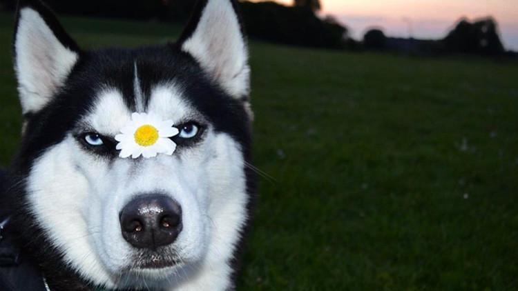 Una celebridad de los memes: Así luce actualmente el famoso 'perro enojado'