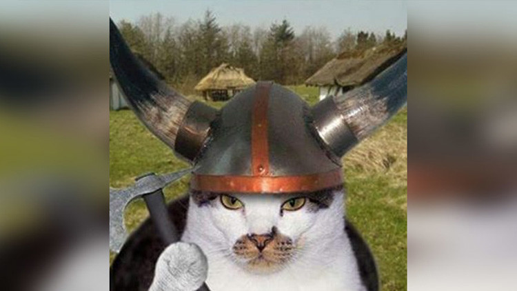 Científicos encuentran muestras de ADN de gatos vikingos